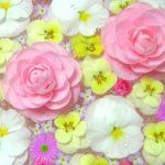 寝室に花を飾って開運!幸運を引き寄せる運気upする寝室の花