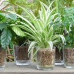 リビングの観葉植物は家電の気を和らげ癒しの効果もある風水アイテム