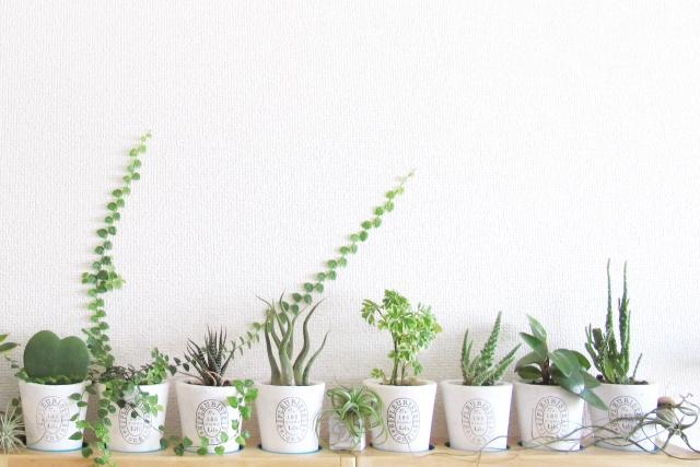 運気アップ観葉植物