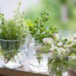 洗面所におすすめ観葉植物!清潔な気を取り込む風水で効果のある植物