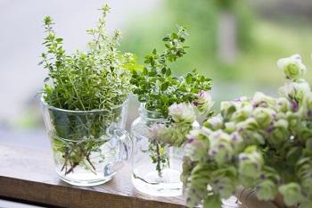 植物の風水